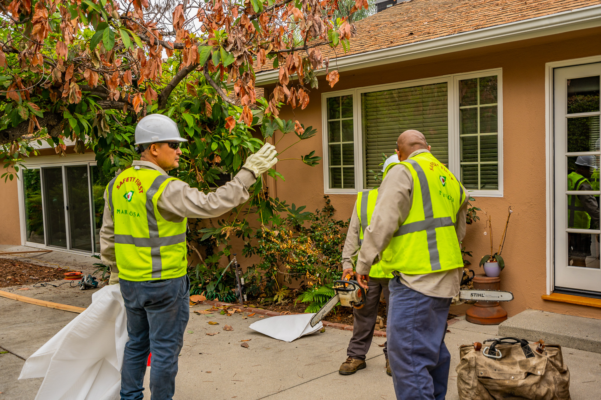 Mariposa Tree Removal Ground-26.jpg