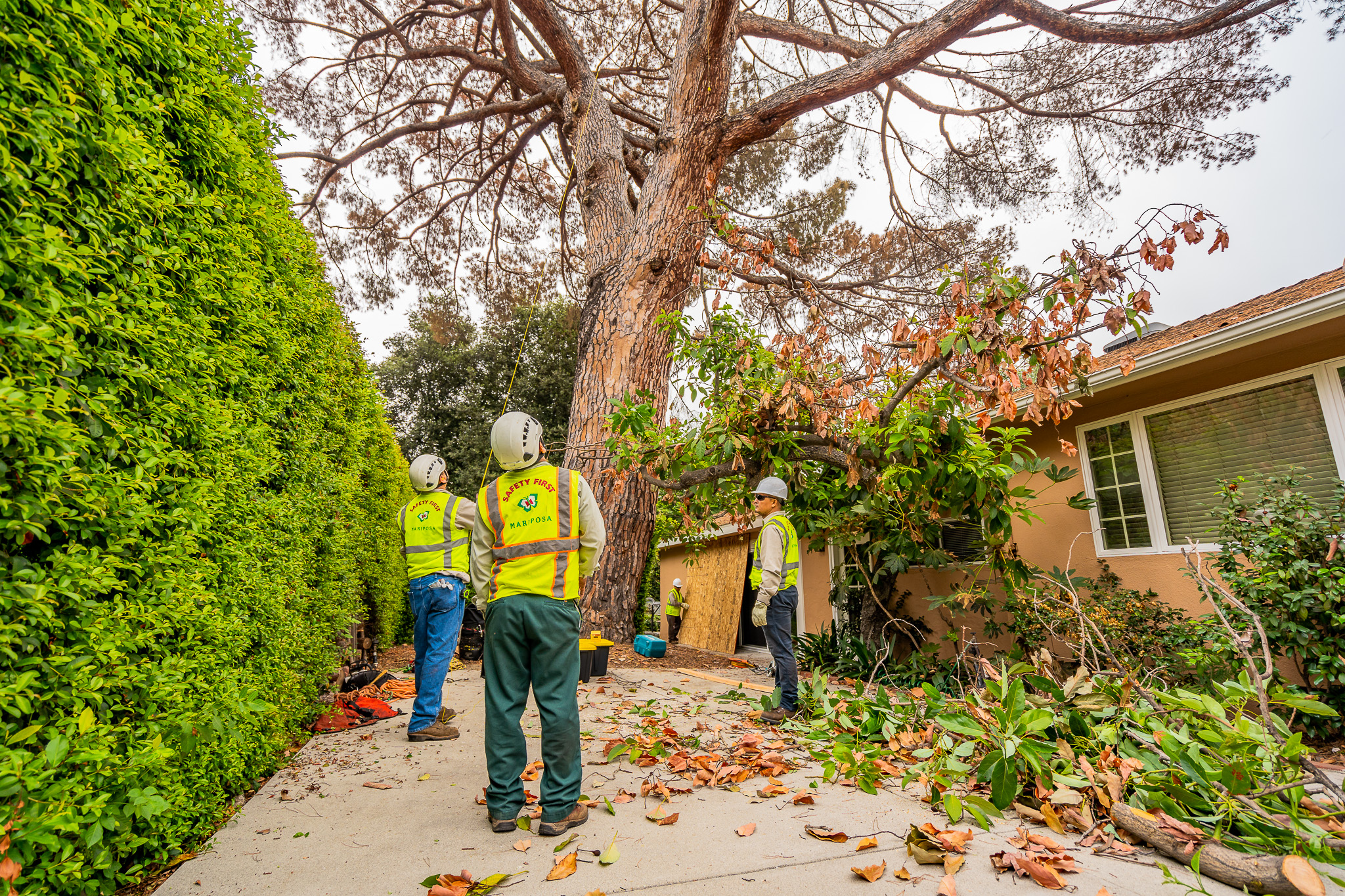 Mariposa Tree Removal Ground-29.jpg
