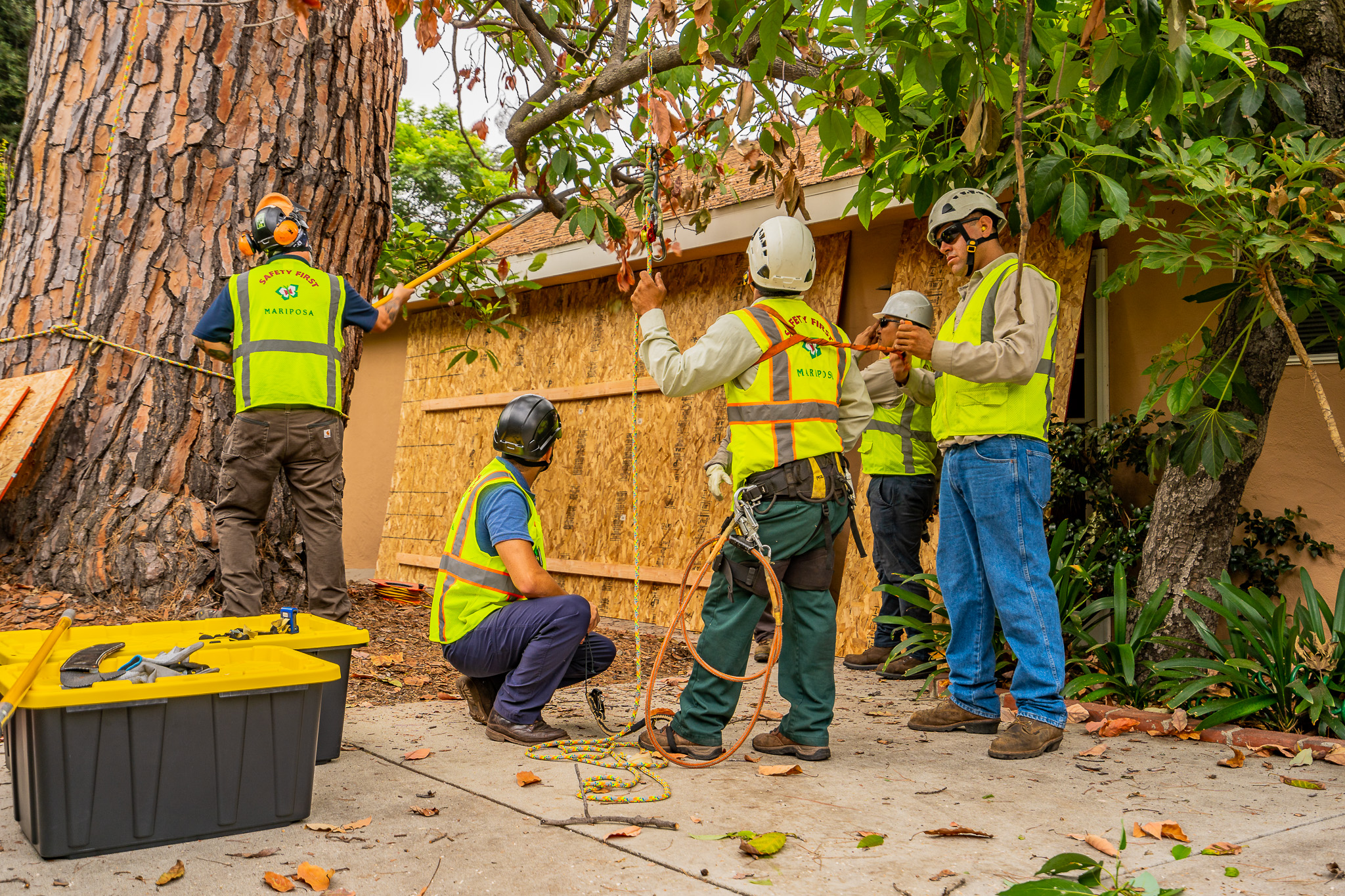 Mariposa Tree Removal Ground-39.jpg
