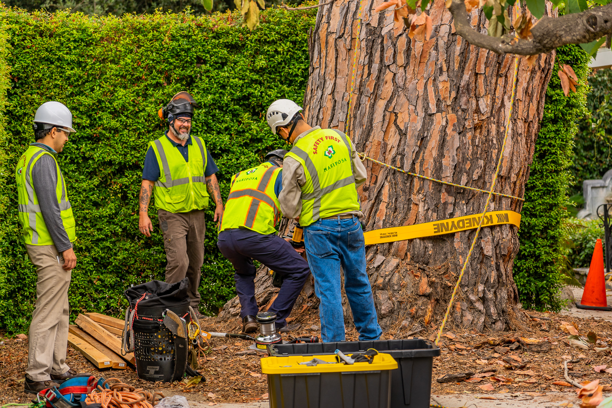 Mariposa Tree Removal Ground-55.jpg
