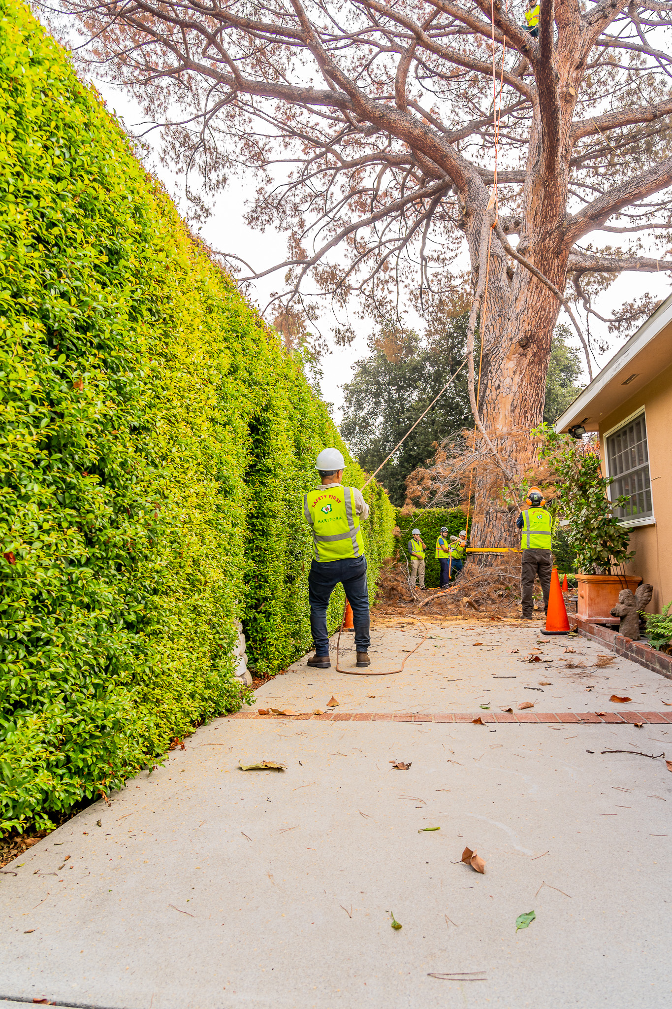 Mariposa Tree Removal Ground-64.jpg