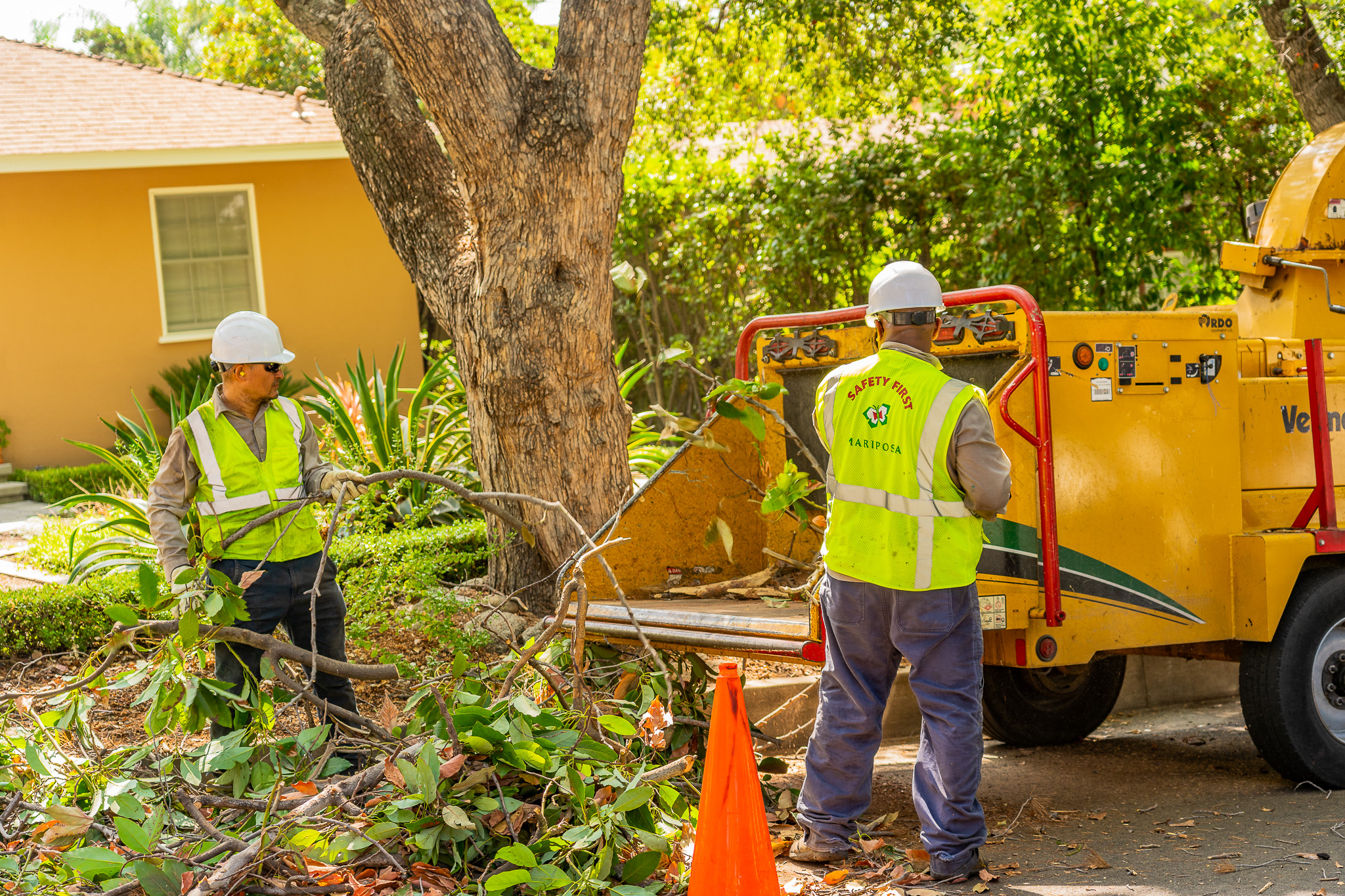 Mariposa Tree Removal Ground-69.jpg