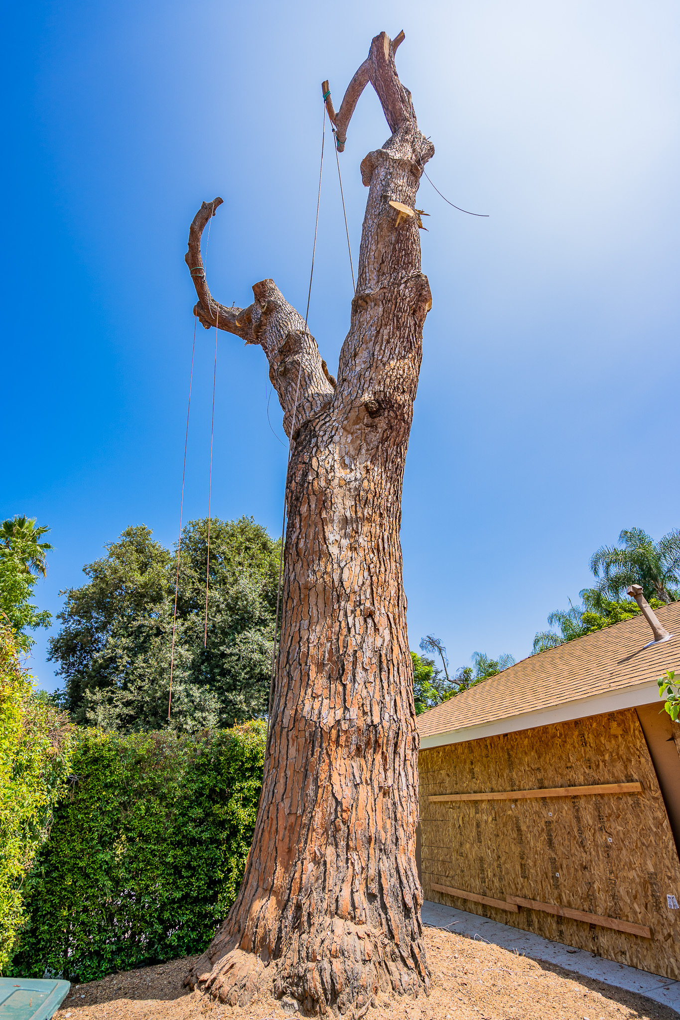 Mariposa Tree Removal Ground-85.jpg
