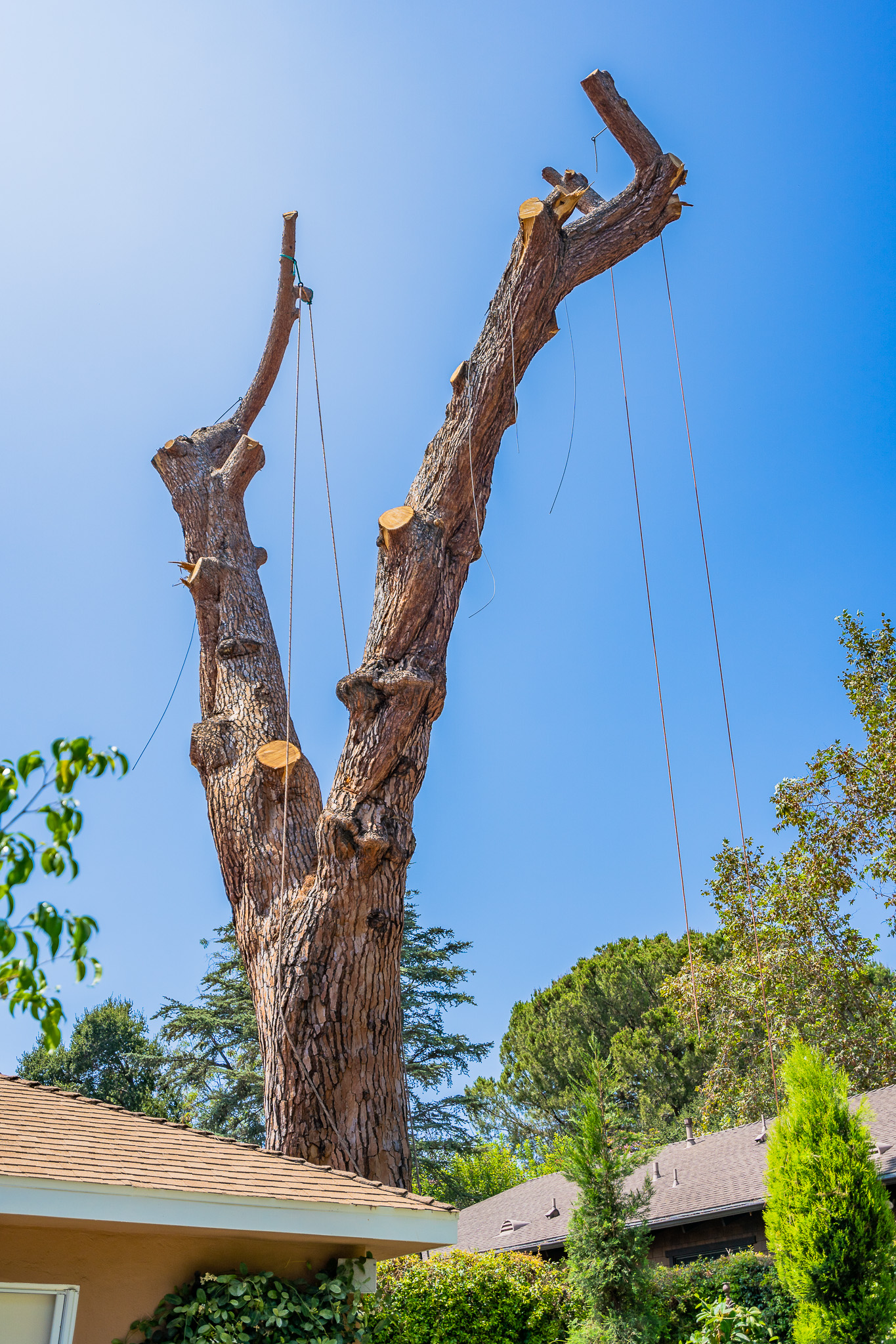 Mariposa Tree Removal Ground-87.jpg