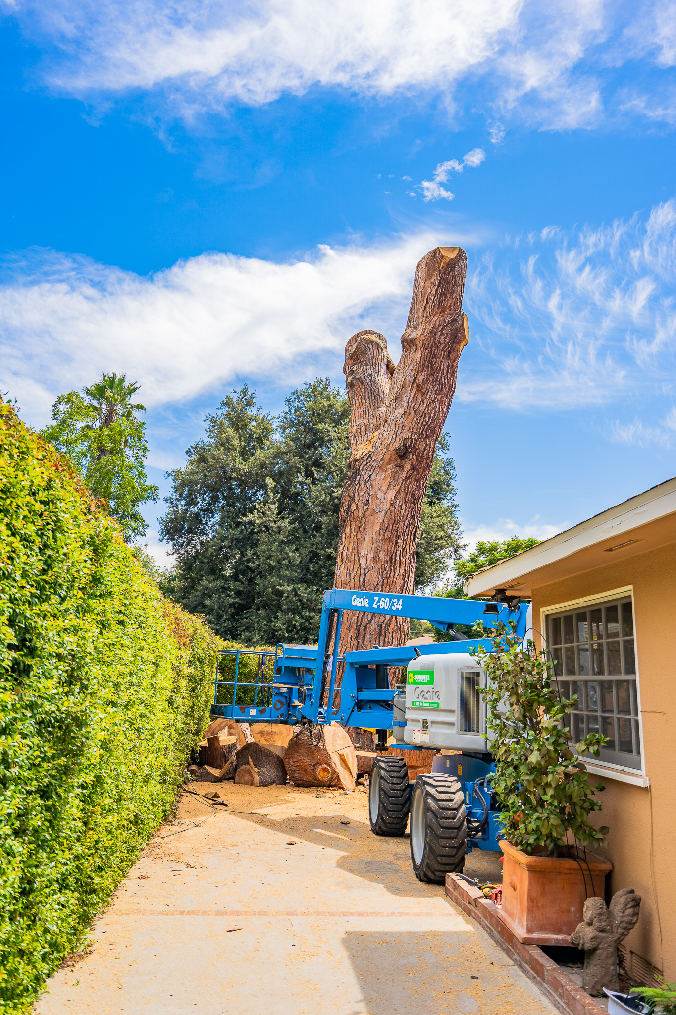 Mariposa Tree Removal Ground-91.jpg