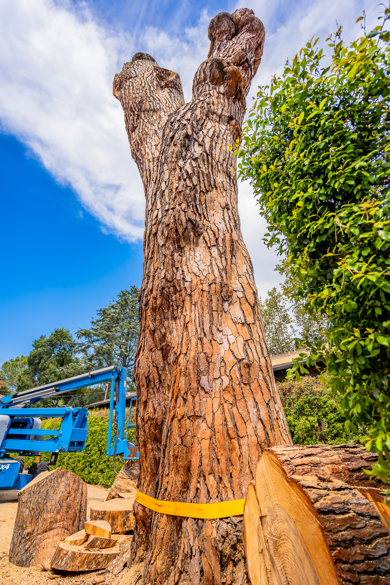 Mariposa Tree Removal Ground-97.jpg