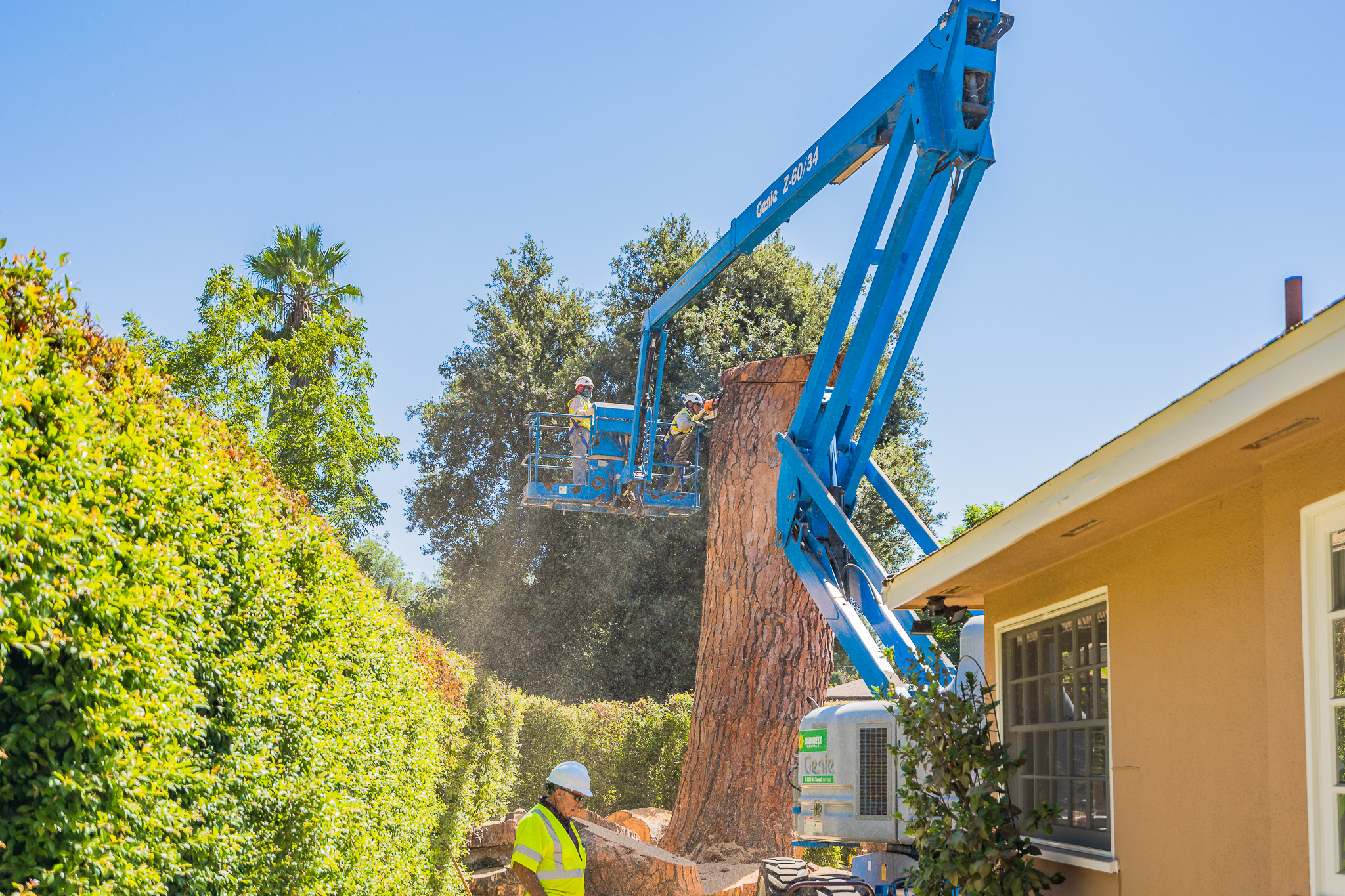 Mariposa Tree Removal Ground-100.jpg