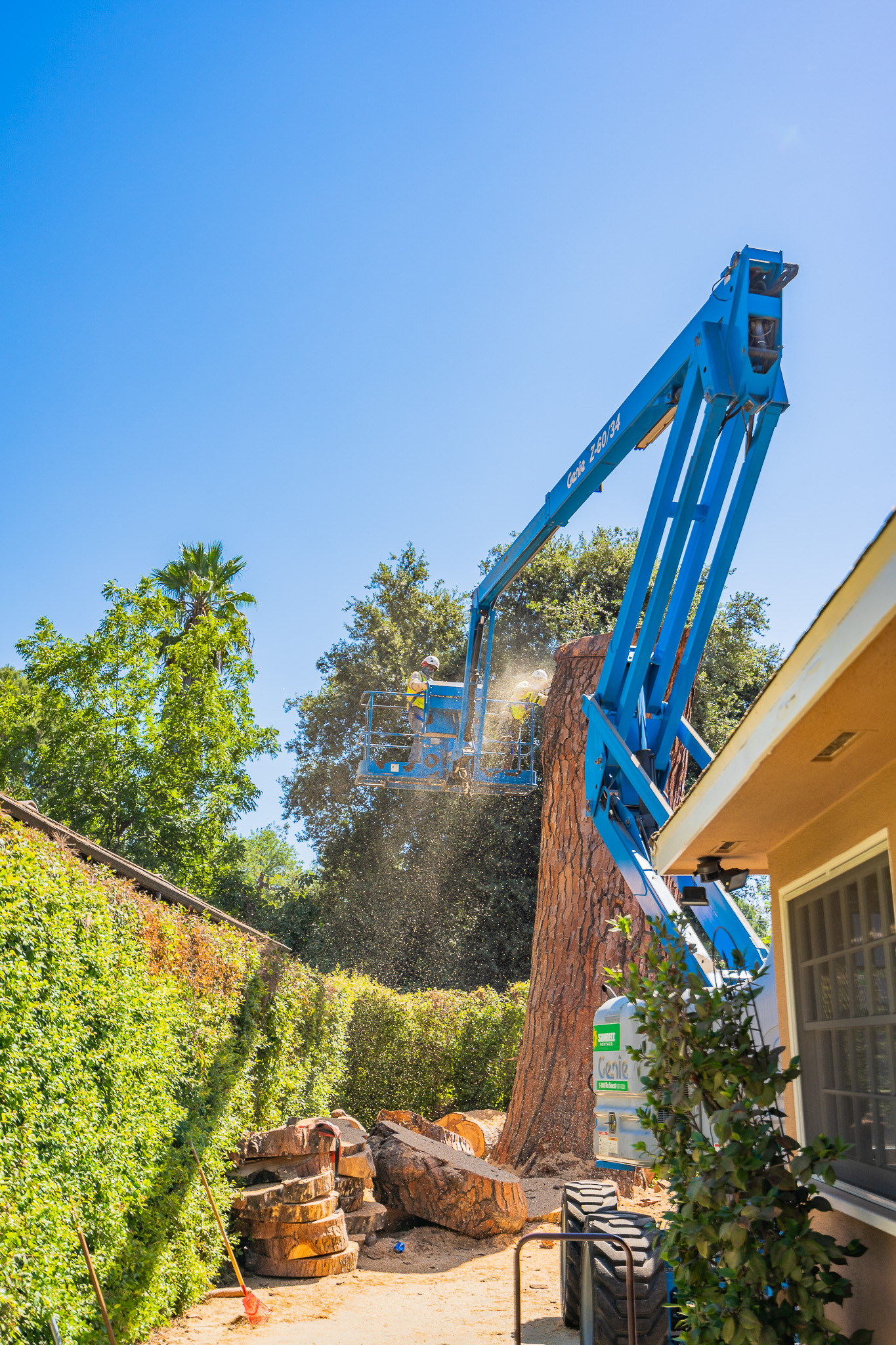 Mariposa Tree Removal Ground-101.jpg