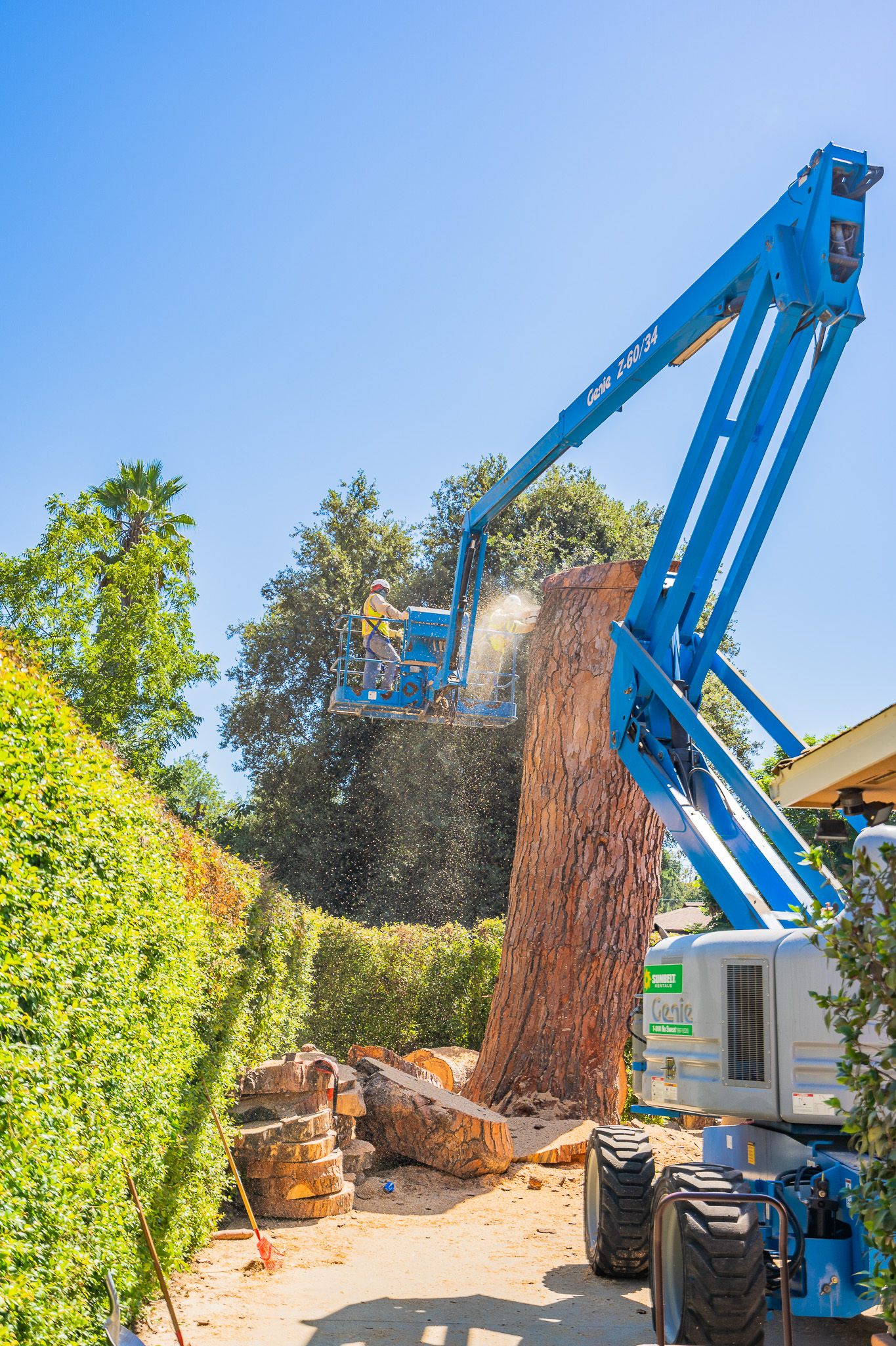 Mariposa Tree Removal Ground-102.jpg