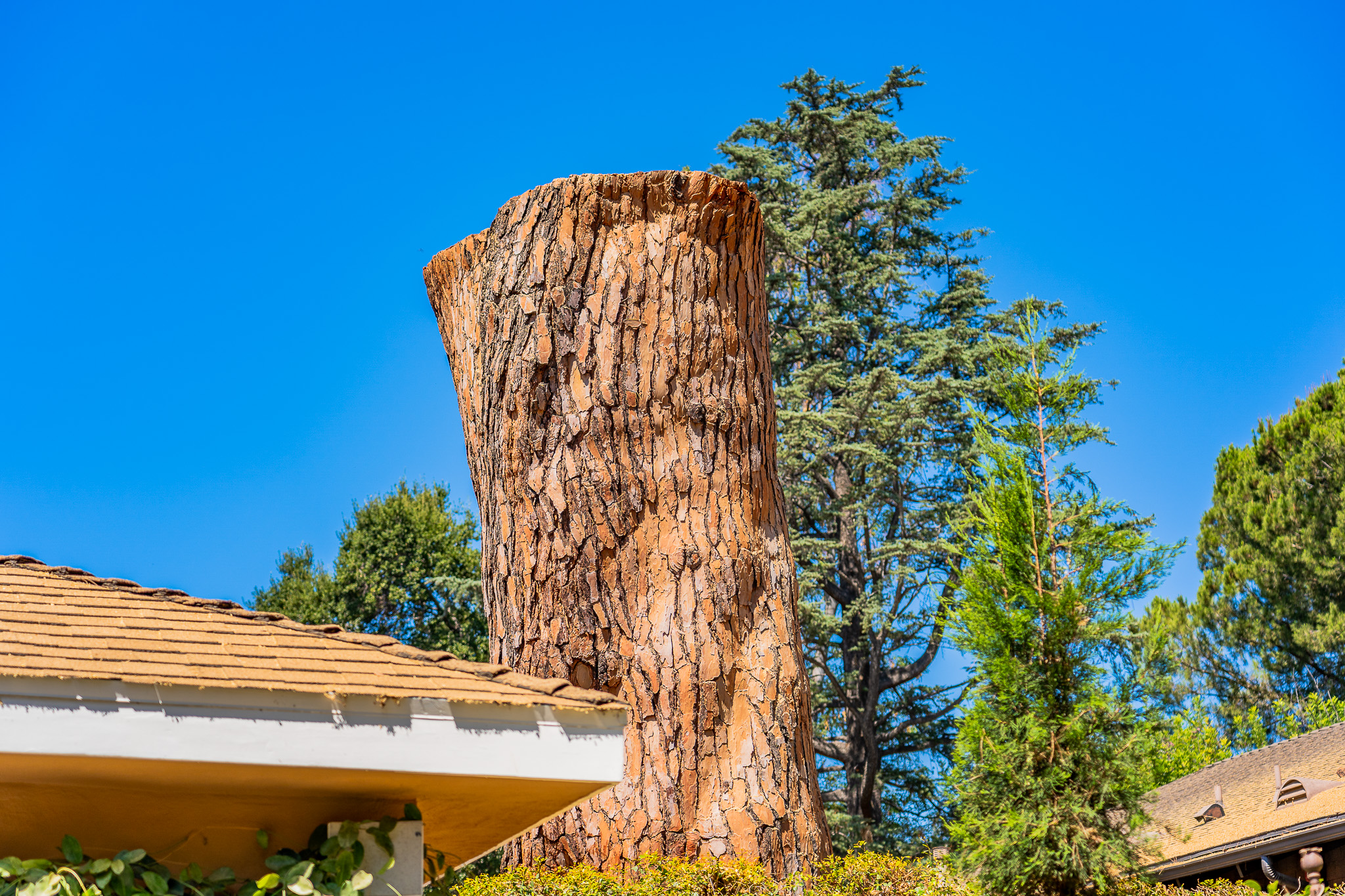 Mariposa Tree Removal Ground-126.jpg