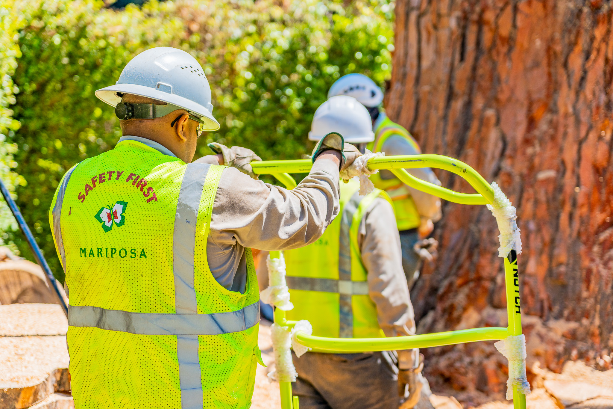 Mariposa Tree Removal Ground-144.jpg
