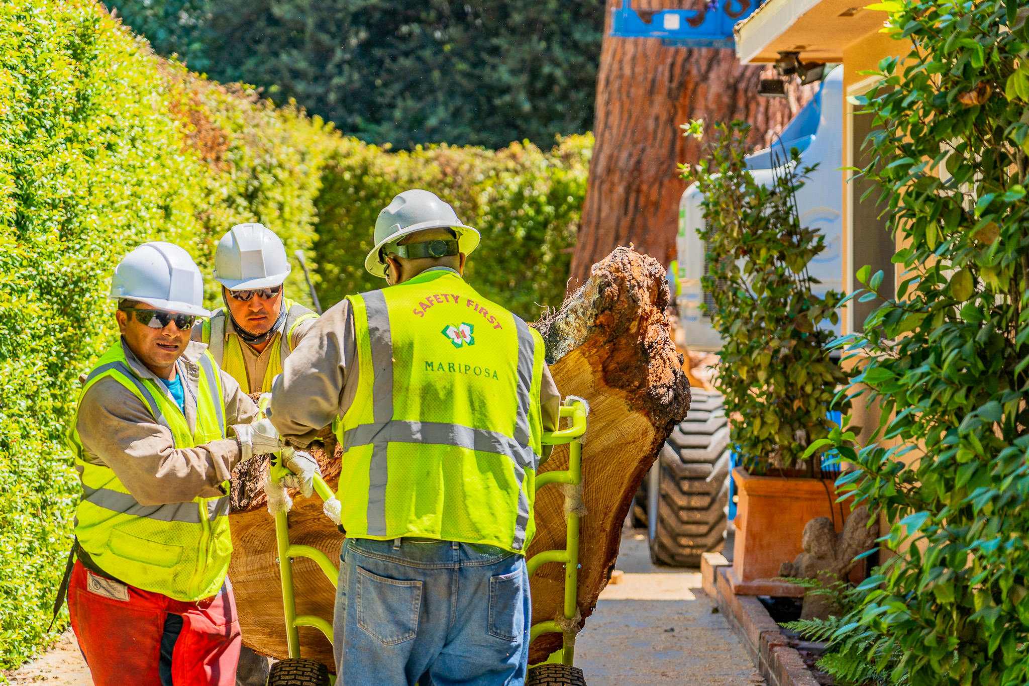 Mariposa Tree Removal Ground-149.jpg