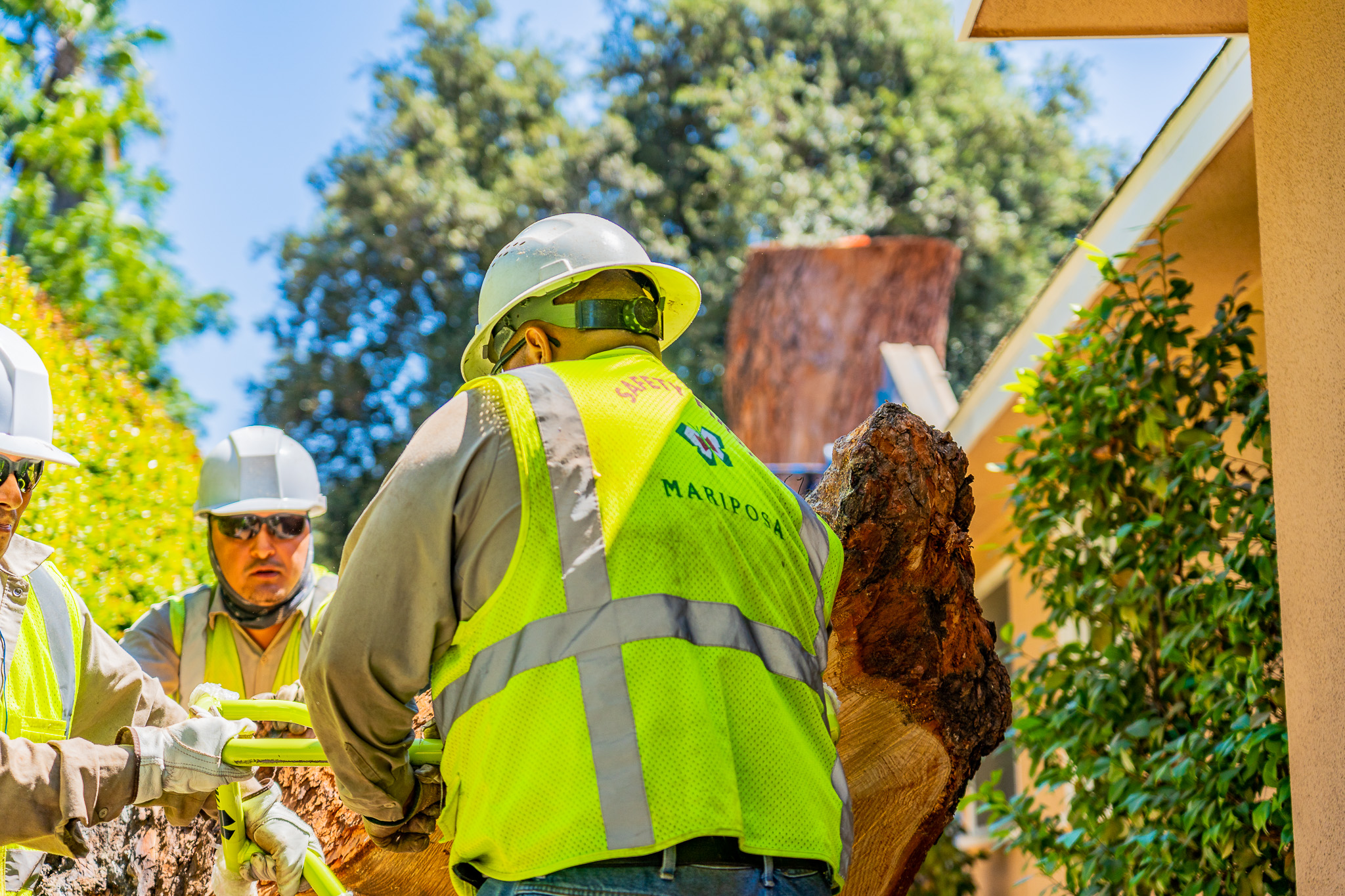 Mariposa Tree Removal Ground-151.jpg