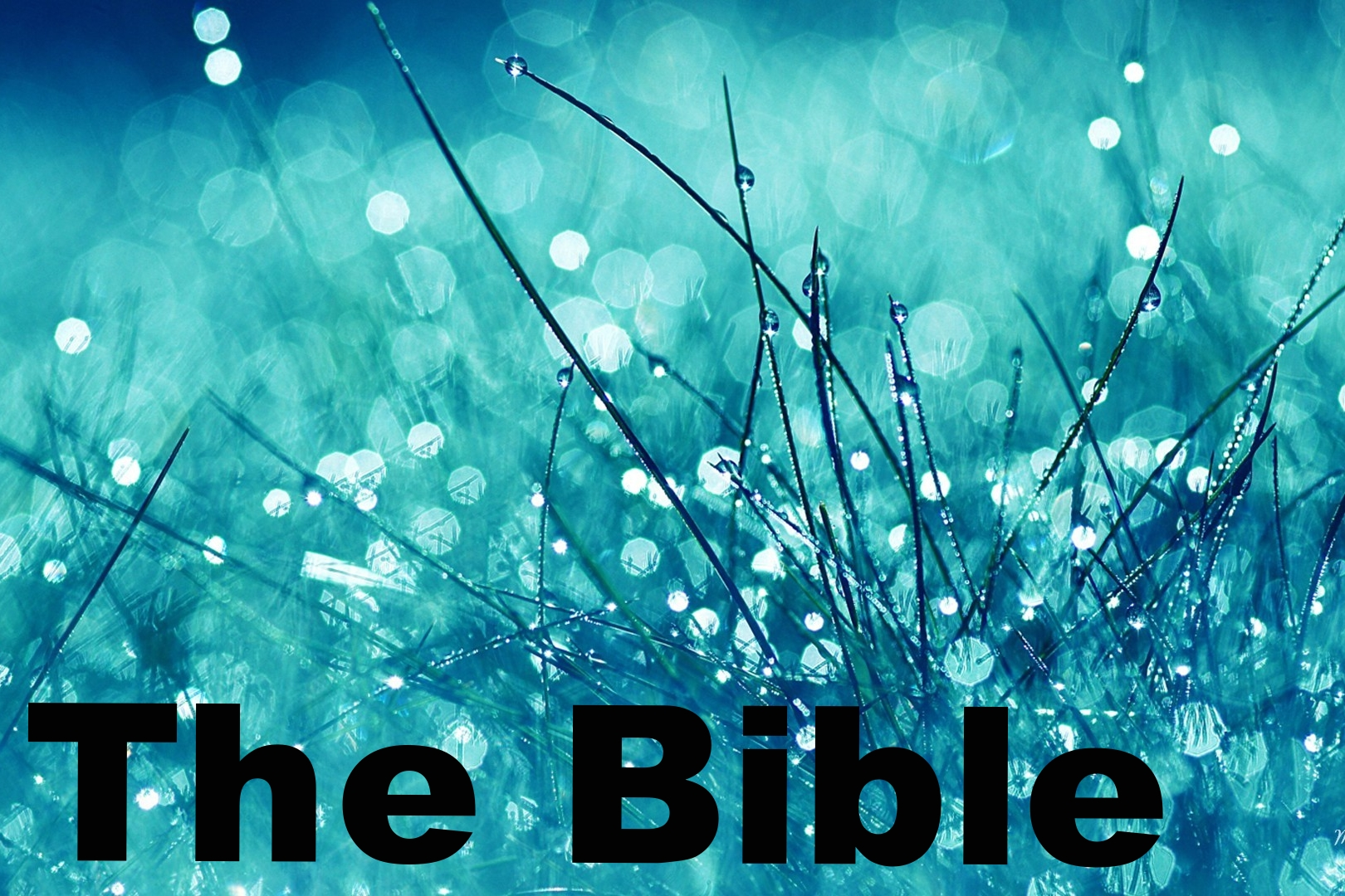 Bible Gateway .One of the best Bible search engines for versions other than the NRSV, plus a wealth of Bible study tools.
