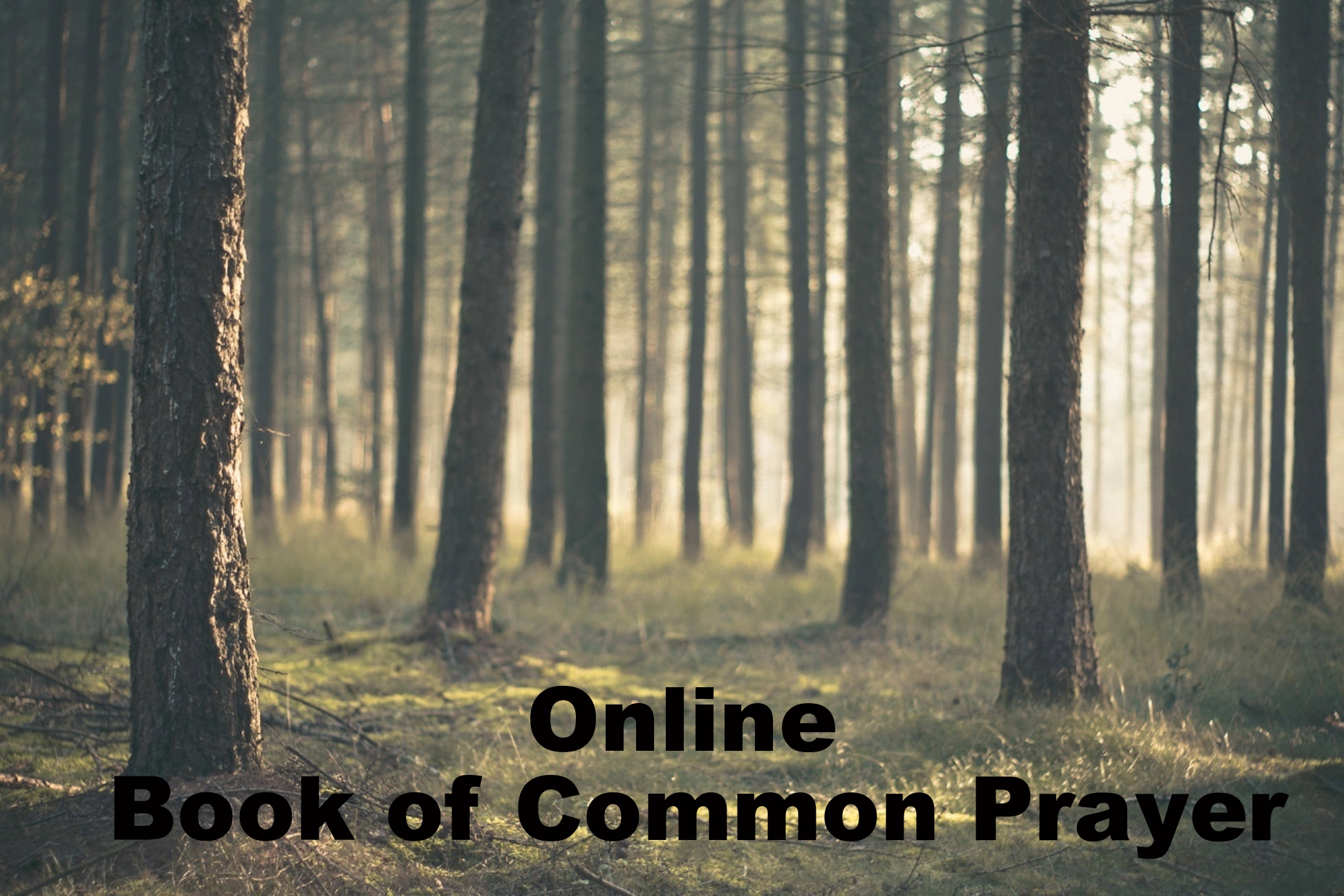 Book of Common Prayer Online  .    An online version of the 1979 Prayer Book that can be browsed with your web browser. To view the Catachism, which is a basic statement of Episcopal beliefs, click here .