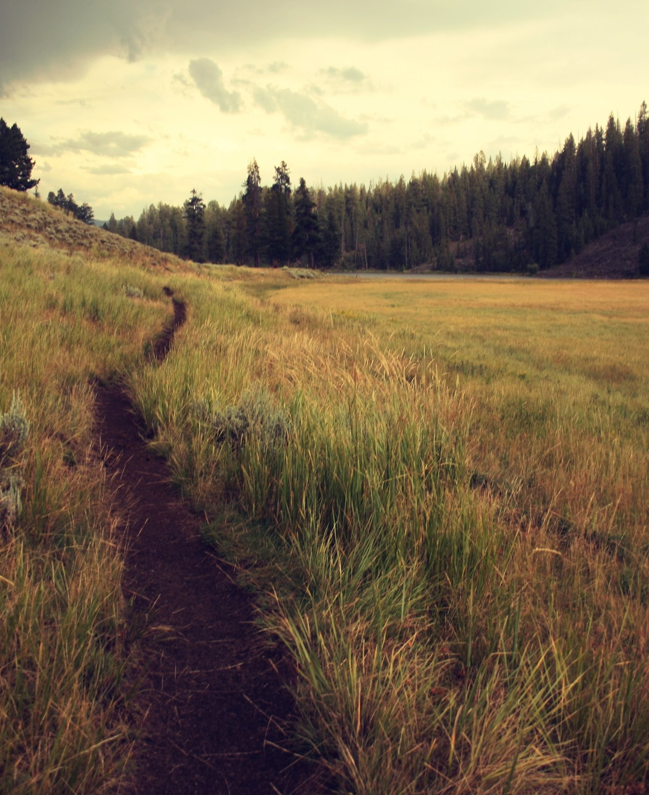 Tanya Vallianos_Nature-Inspired Psychotherapist_Fort Collins, CO