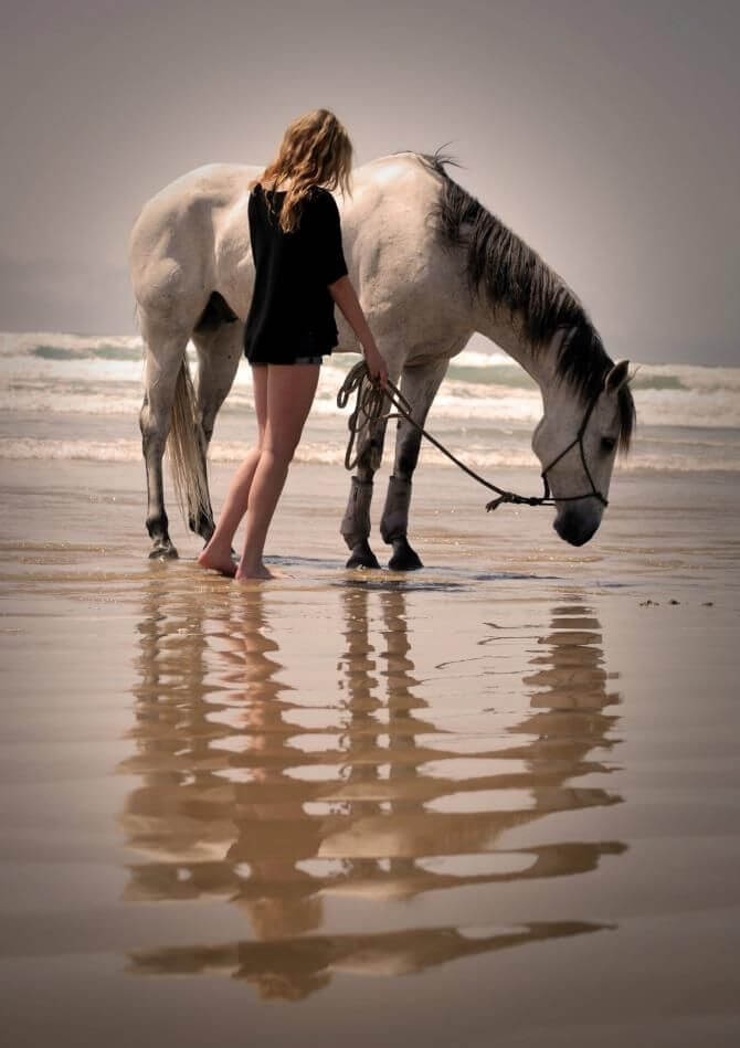 Horses+Healing+Equine+Assisted+Therapy+Blog+Inner+Sun+Healing+Arts