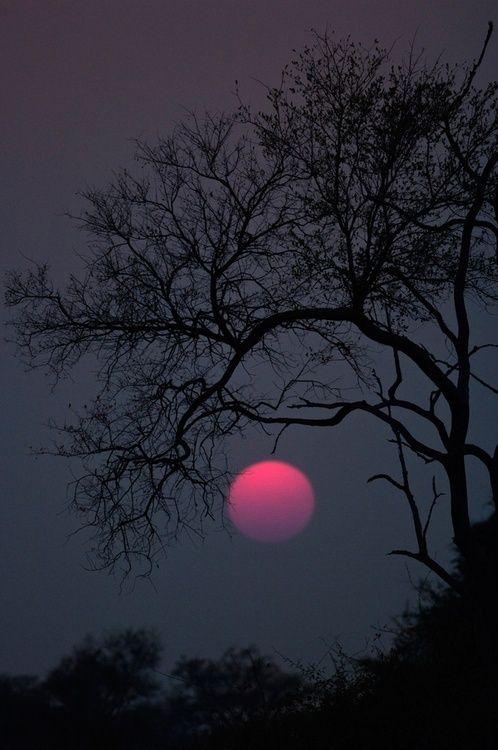 April's Pink Moon