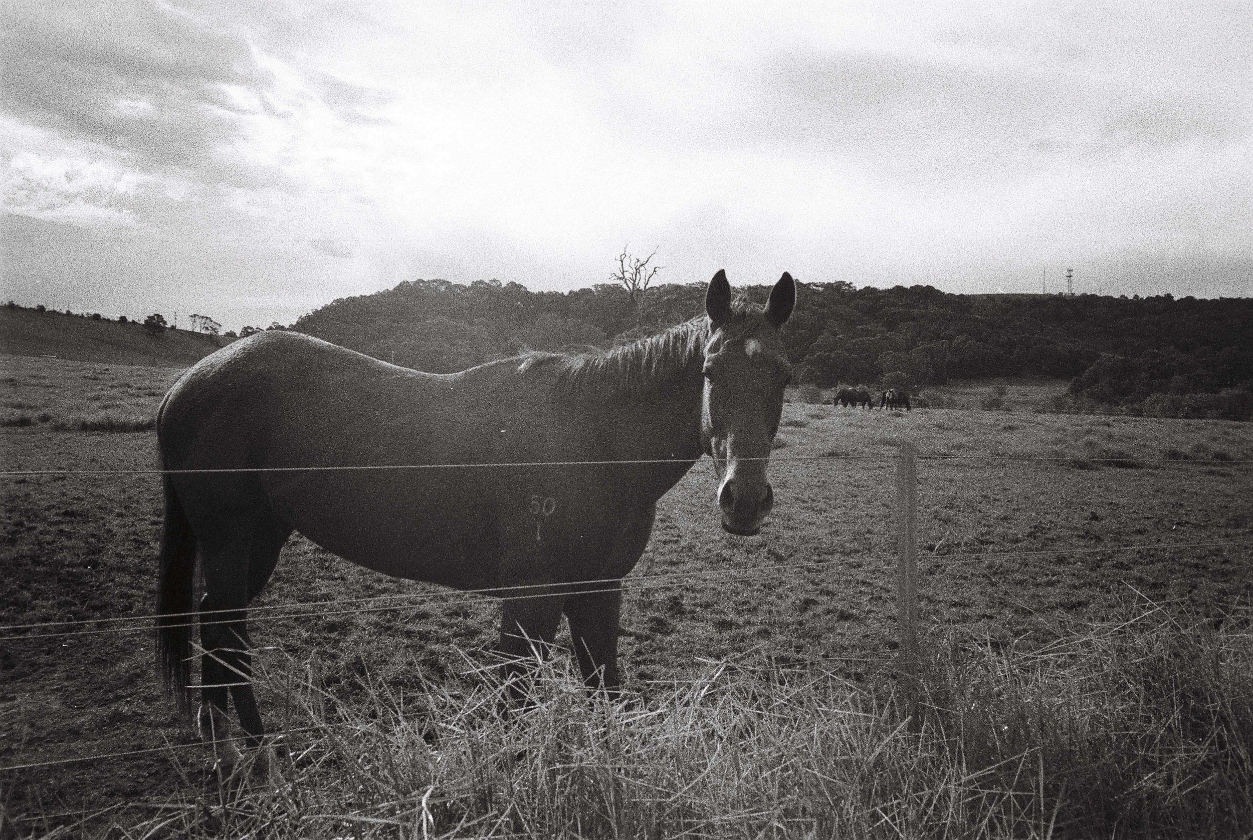 Agar's Lane Horse, taken by me on RPX 400, pushed to 800.