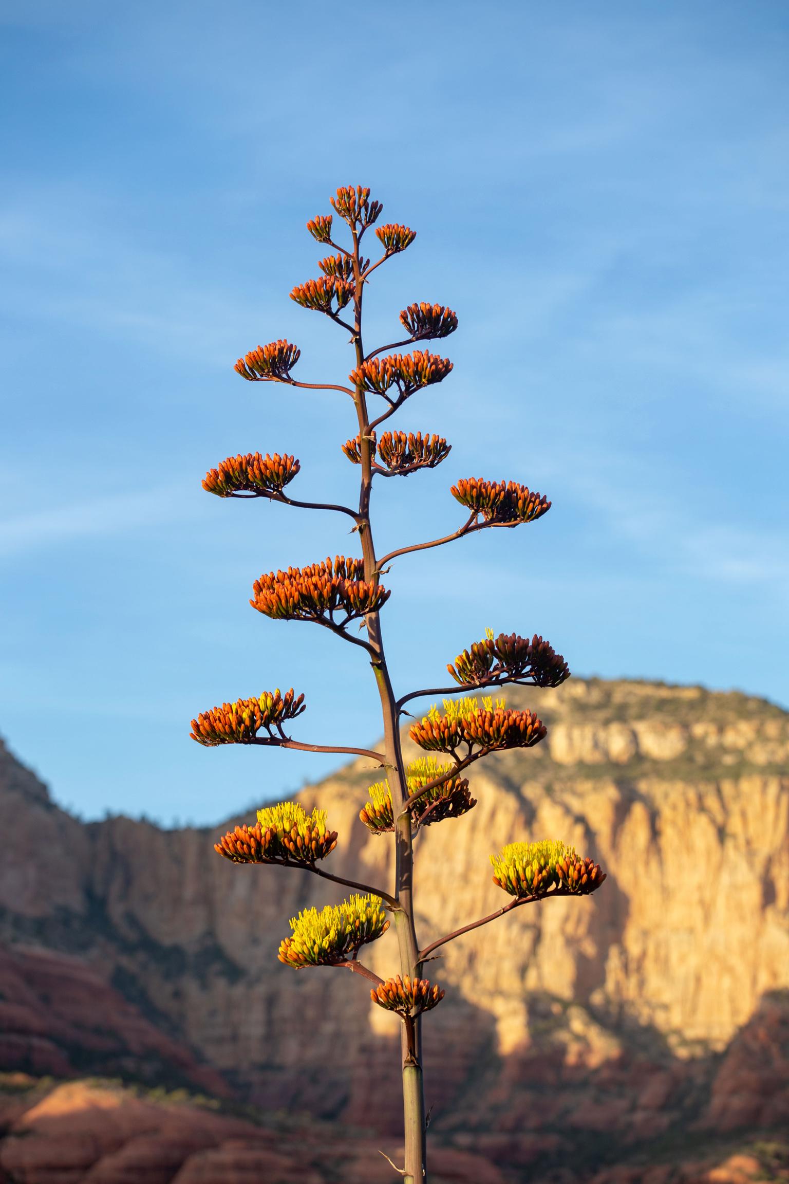 06012018 AZ_Boulder_Sedona-166.jpg