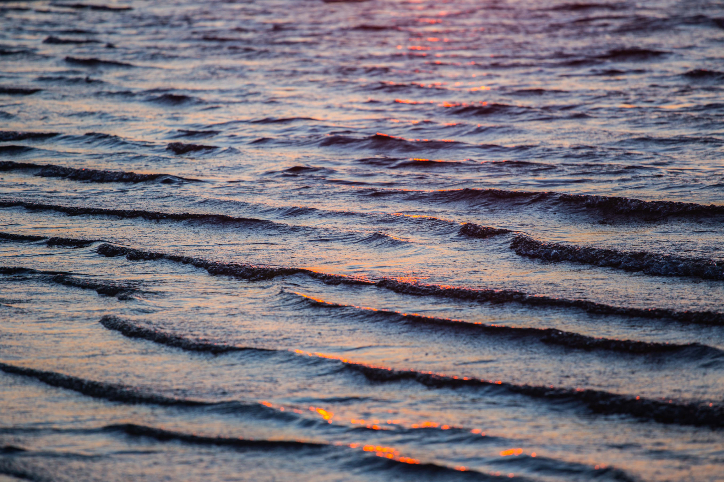 Assateague Island-6511.jpg