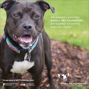 Thank you Bissell Pet Foundation for choosing Outcast Rescue as your spay/neuter grant recipient for 2018 -