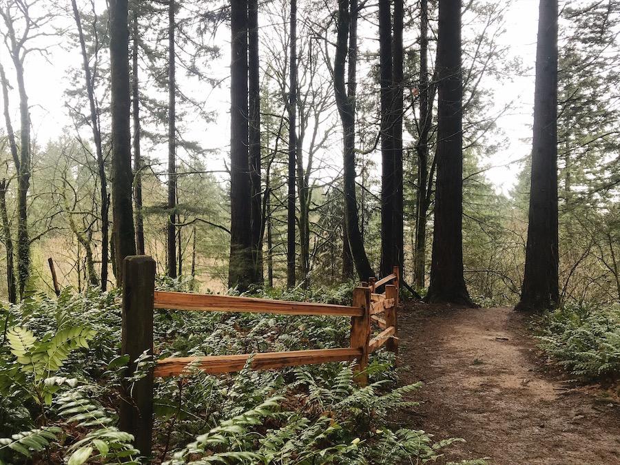 wildwood trail.JPG