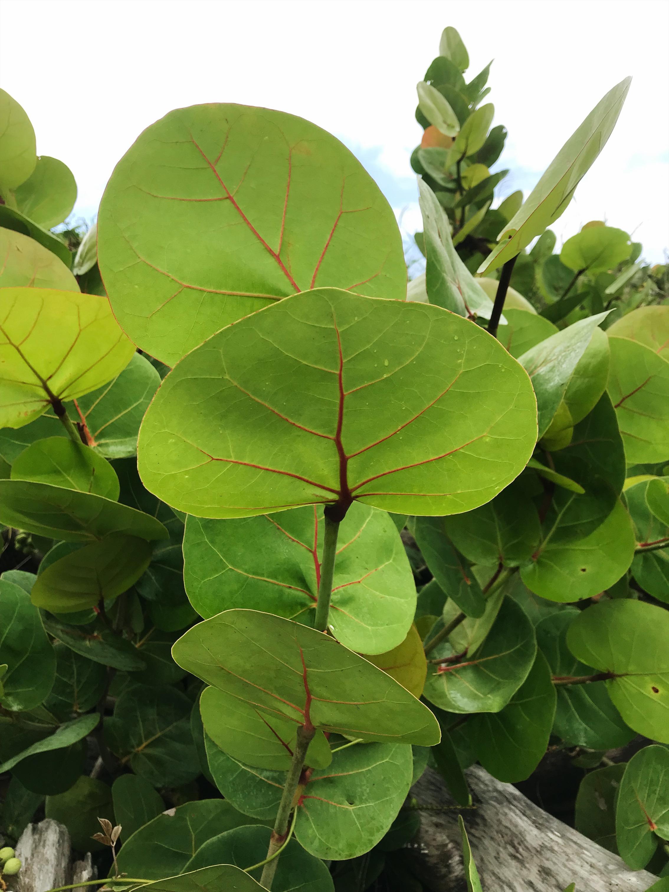 tropical botanical leaves kauai travel photography wall art nature inspired.JPG