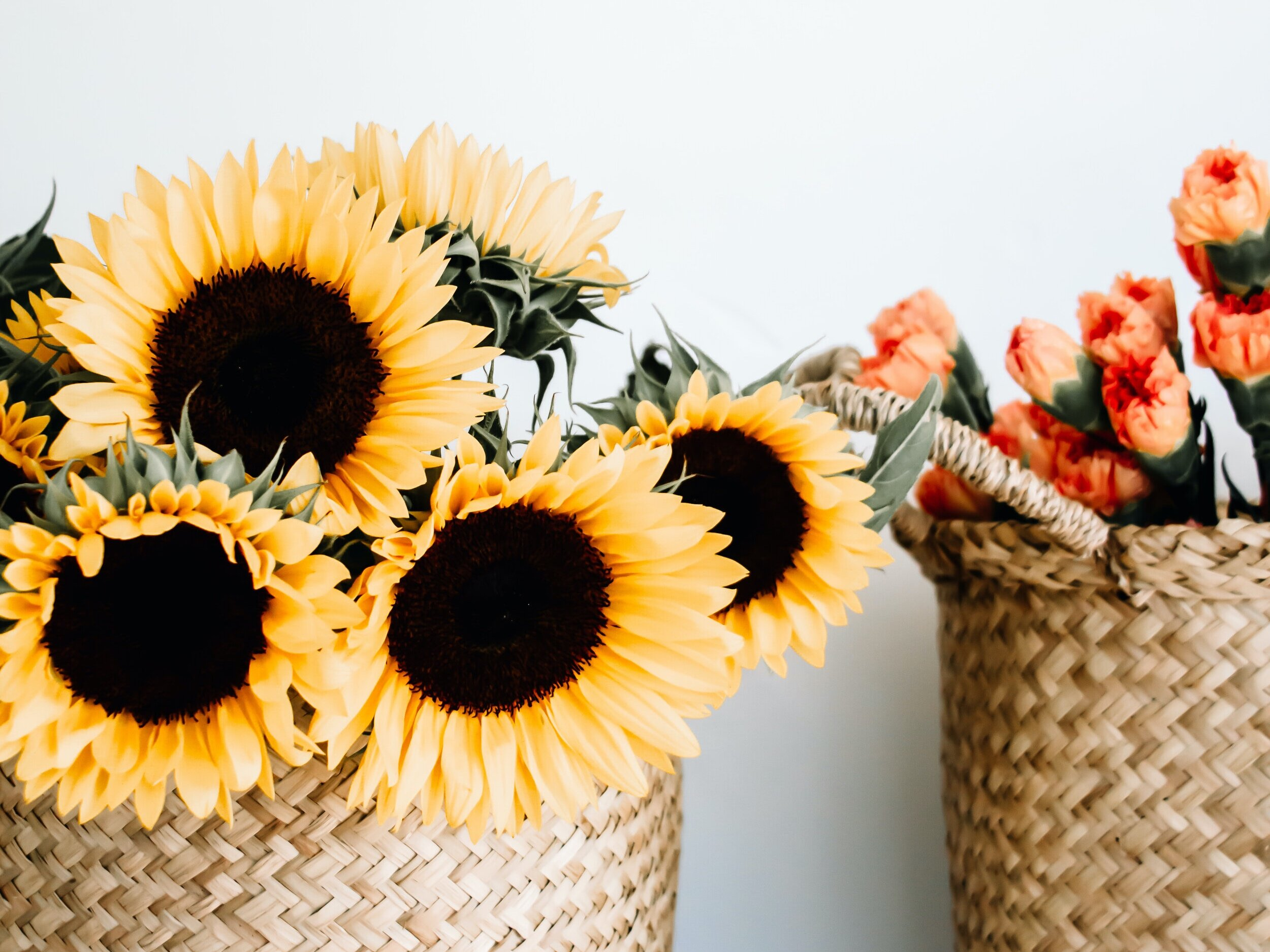 End of the summer sunflower pick