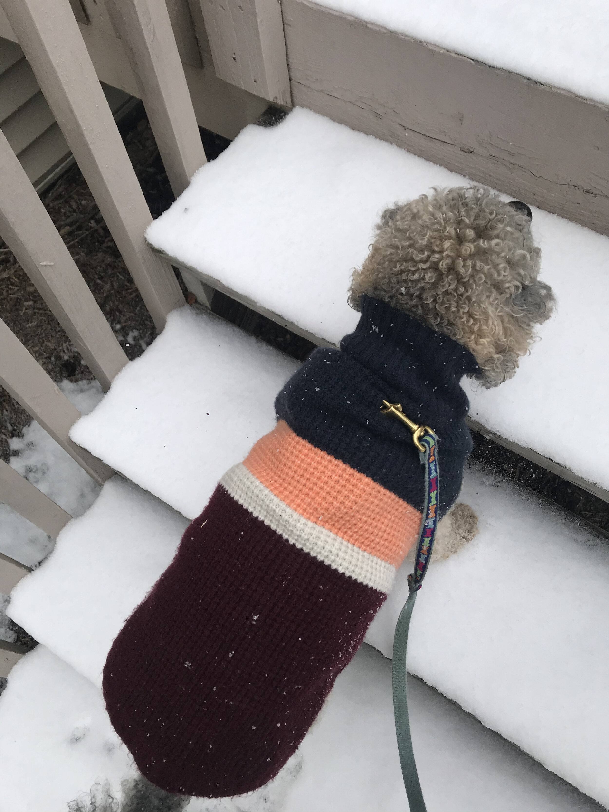 How to be active with dogs during winter