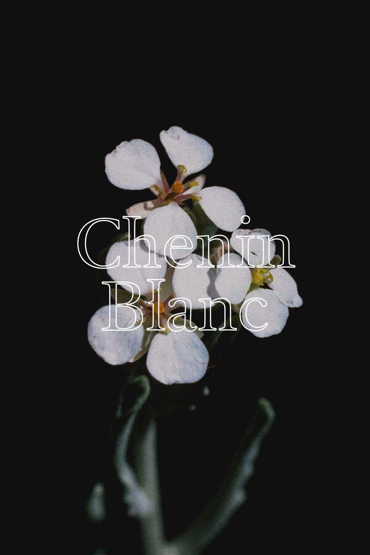 Metamorphika Chenin Blanc  - CHENIN BLANC
