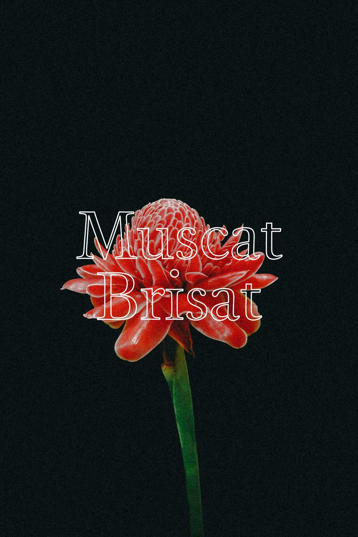 Metamorphika Muscat Brisat  - MUSCAT