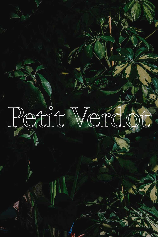 Petit Verdot T  - 100% PETIT VERDOT