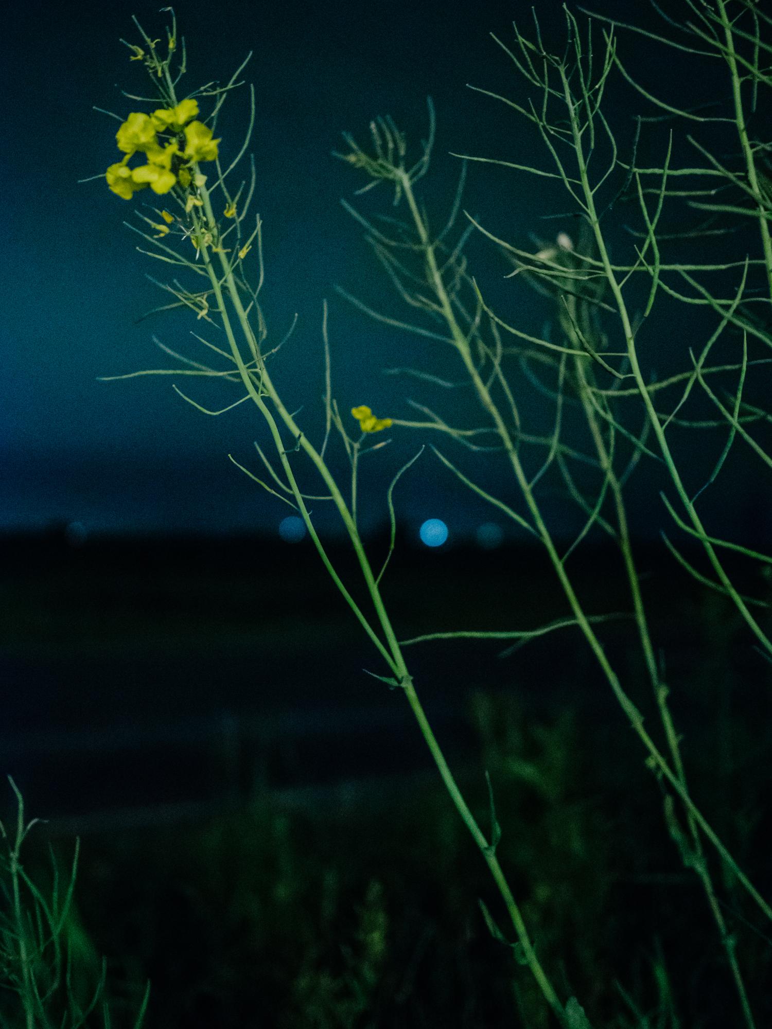nachts-04.jpg