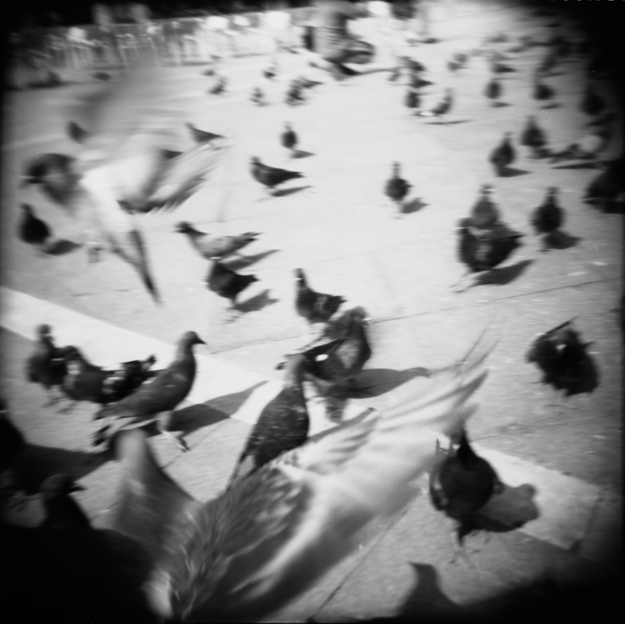 Pigeon_#_3_.jpg