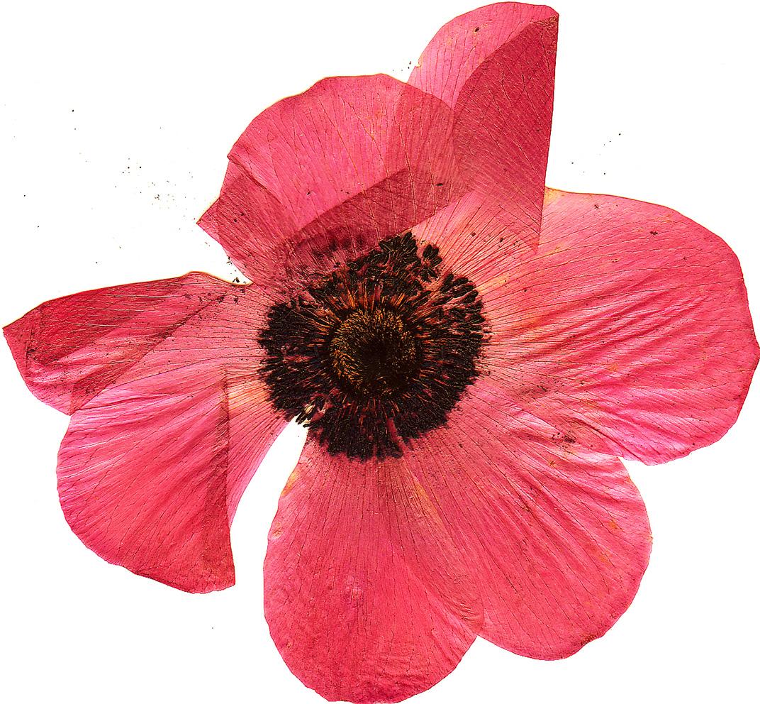 09flower.jpg