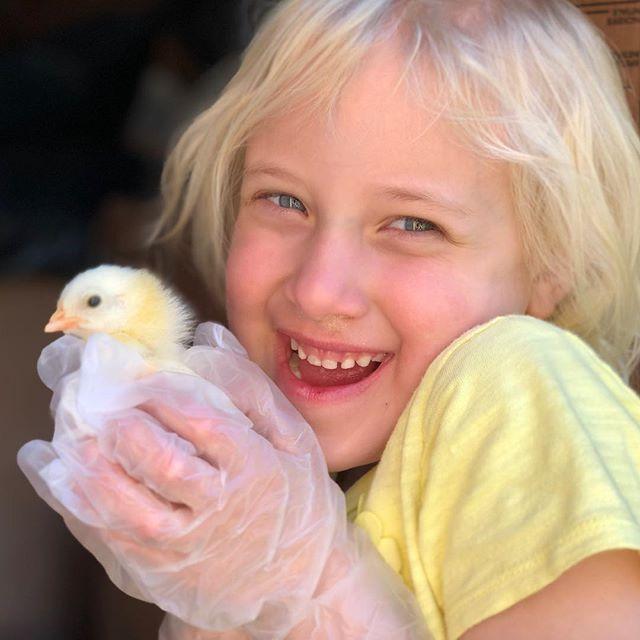Pure happiness. #chicks #babychics #happiness #babies #grandbabies #chickens #hens #babychickensofinstagram #dallas #austin #austintexas #austin360 #ennis #ennisnow #waxahachie #farmlife #farm #ranch #ranchlife