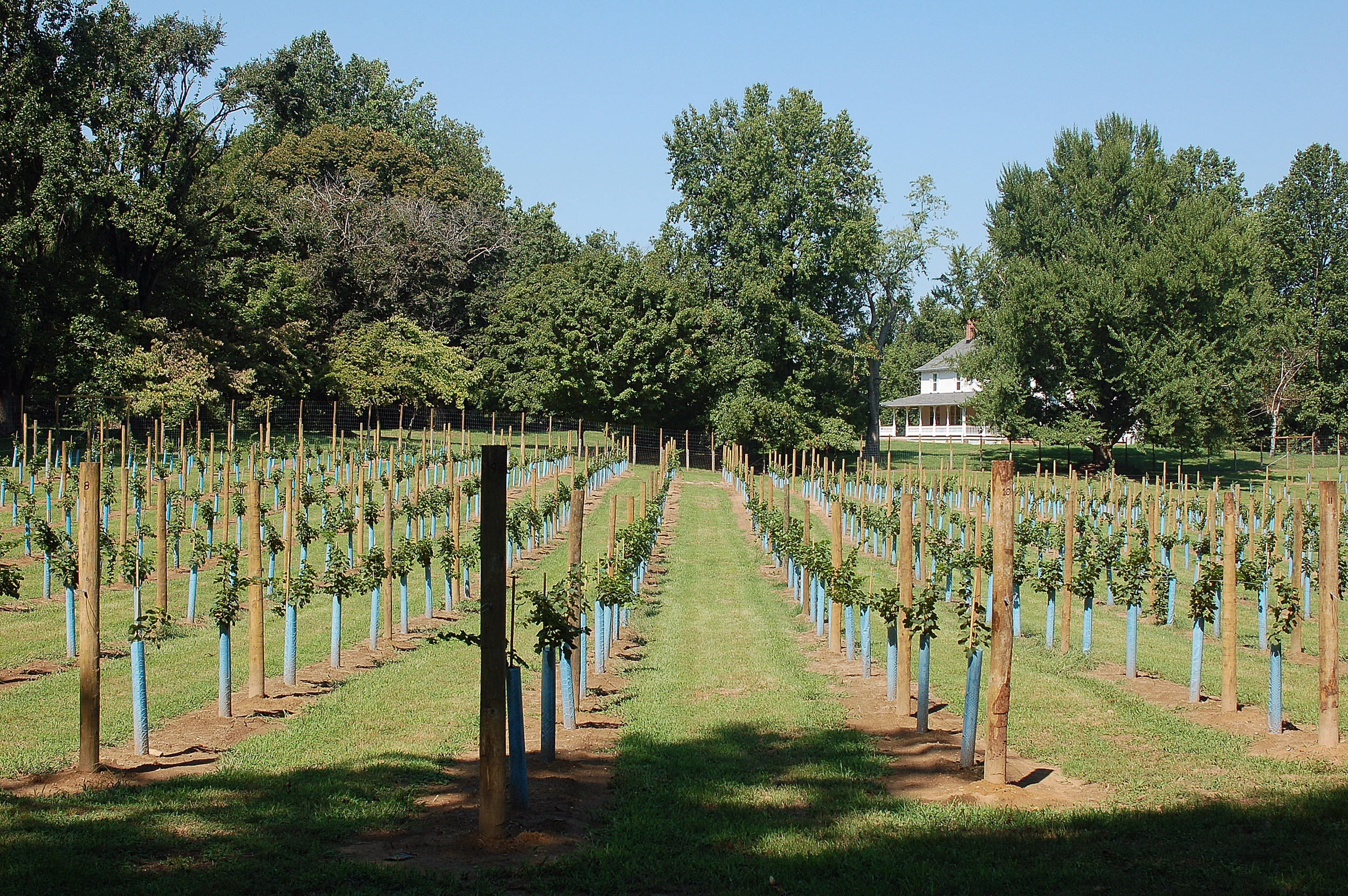 Our Vineyards are Planted to Four Traditional Bordeaux Red Varieties