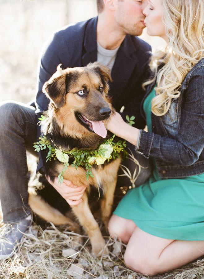 Floral Dog Collar - Winnipeg Wedding Flowers