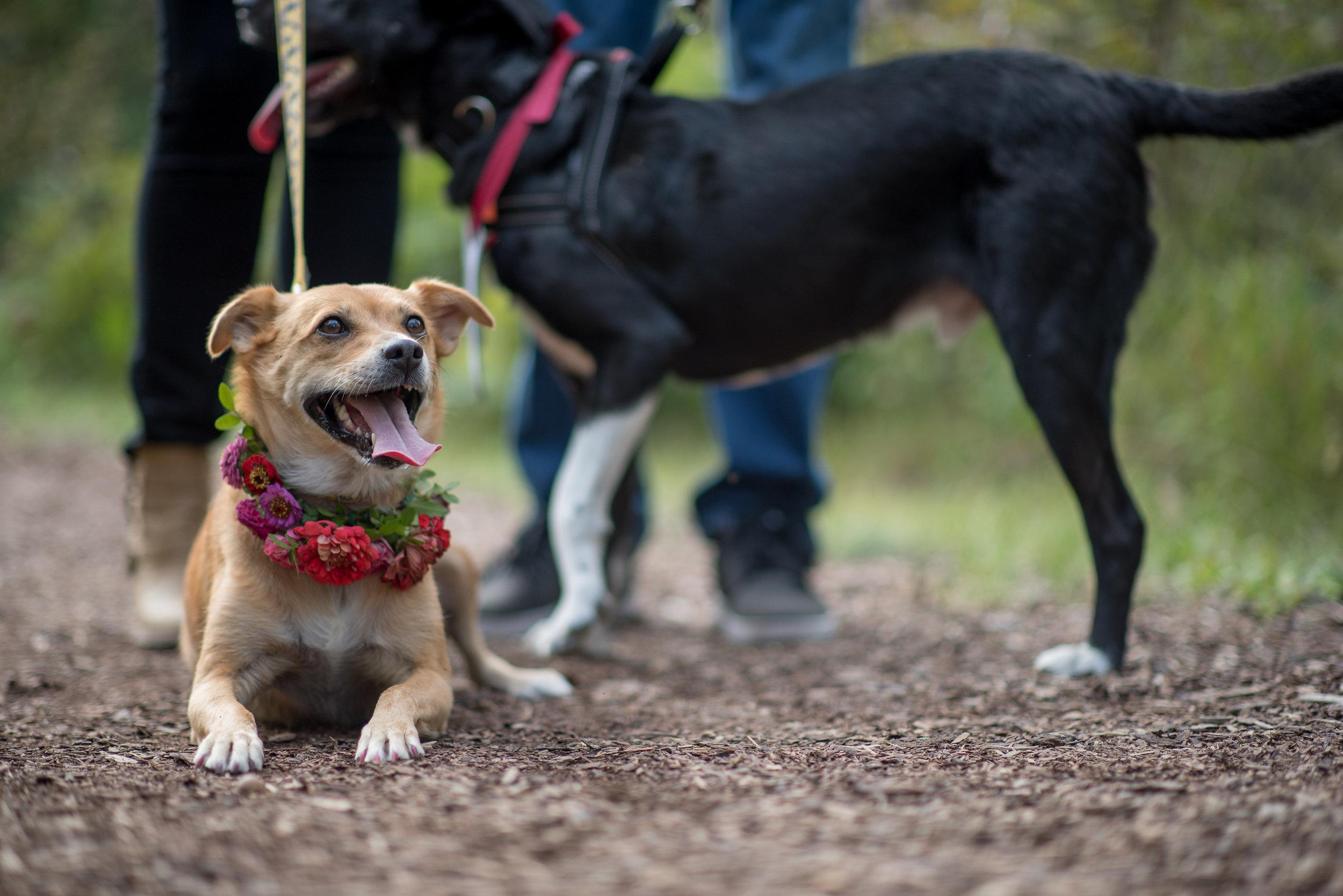 Dog Flower Collar - Winnipeg Wedding Florist