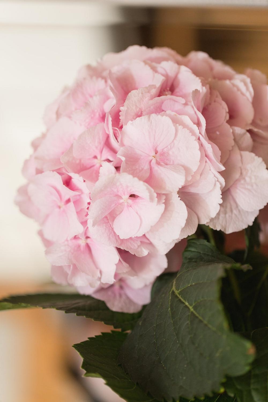 Pink Hydrangea - Spring Wedding Flower Ideas