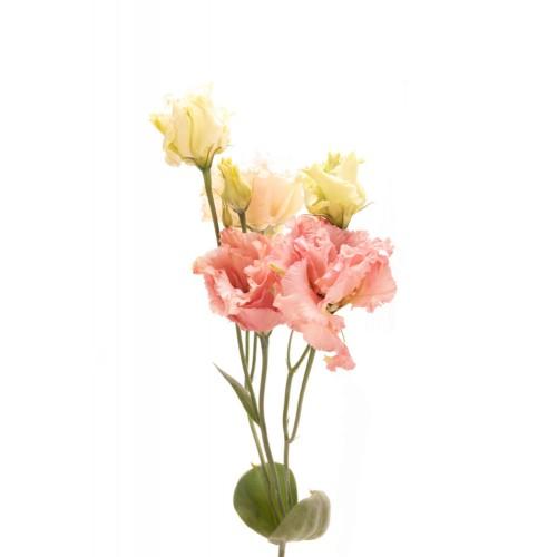 Lisianthus - Budget Friendly Wedding Flowers Winnipeg