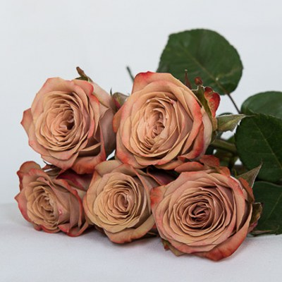 Cappuccino Roses - Mauve Wedding Flowers