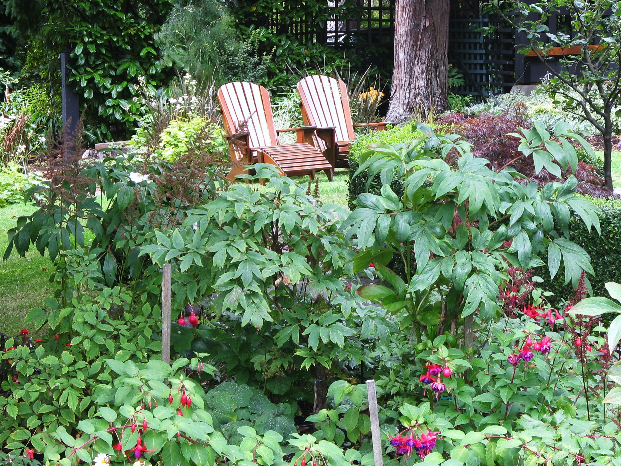 lawn chairs and woodland garden