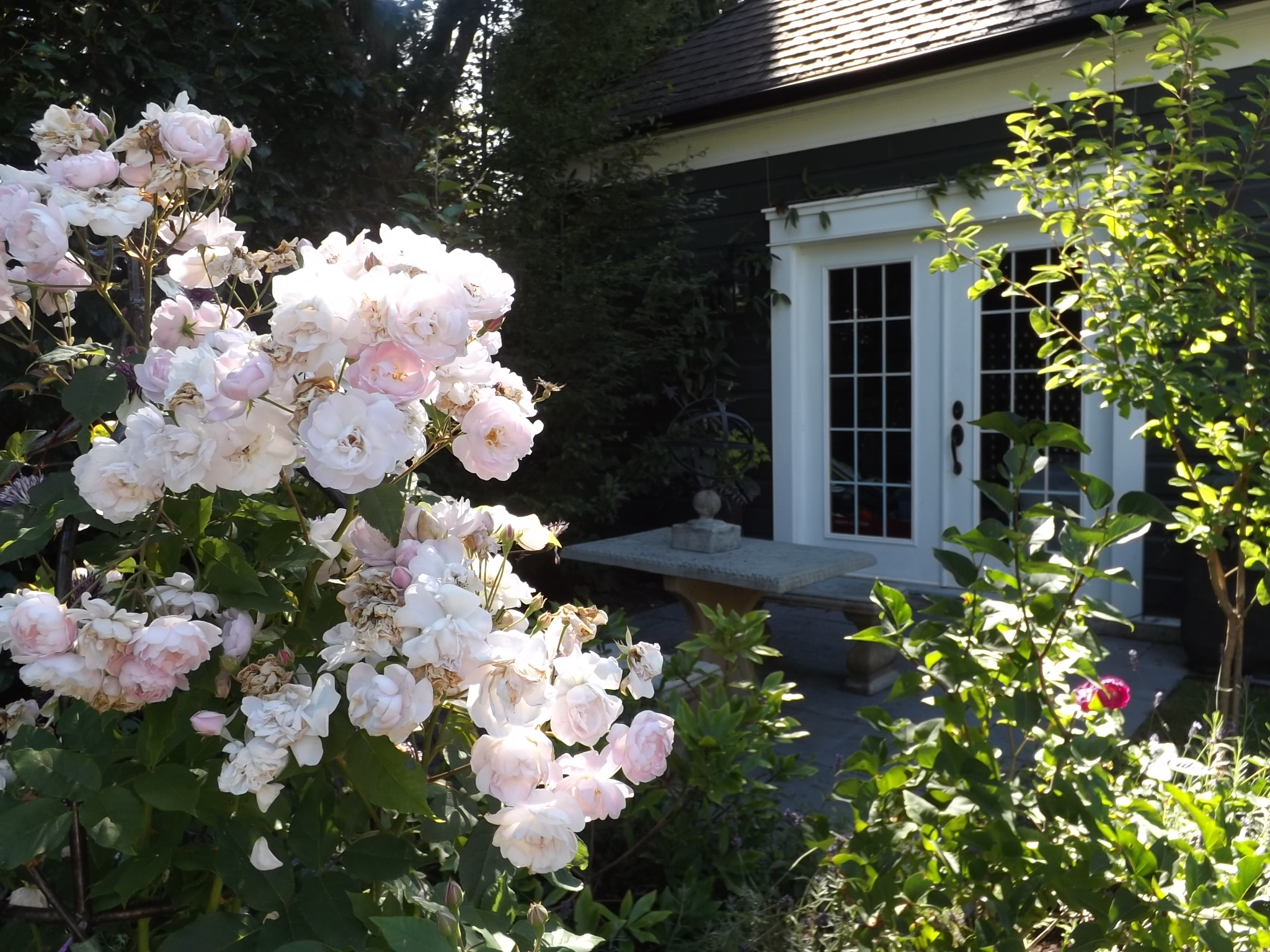 Roses outside a playhouse