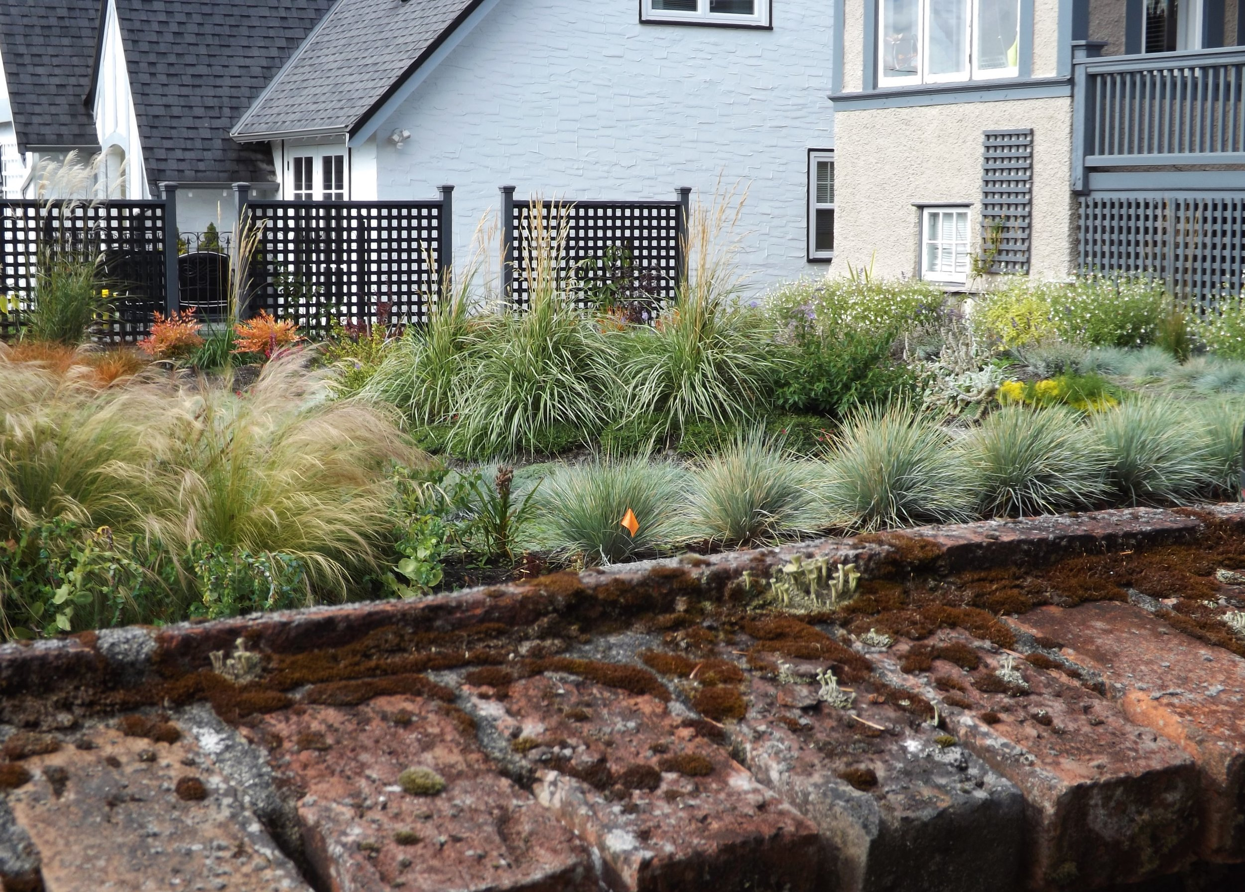 Varying the heights and textures of grasses will give you dramatic effects that make lawns seem ho-hum by comparison.
