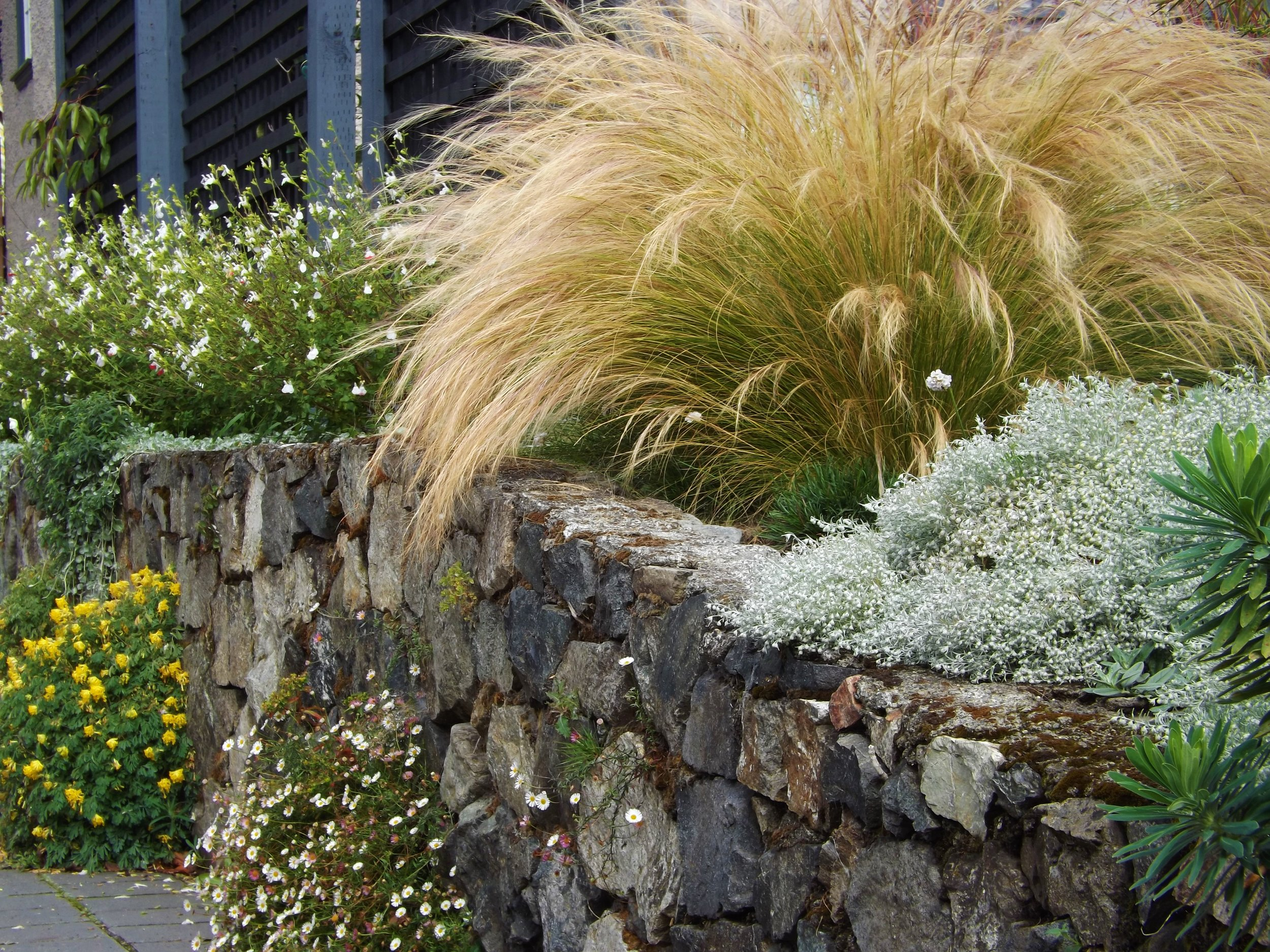 Fine textured feather grass floats over the top of a rock wall.