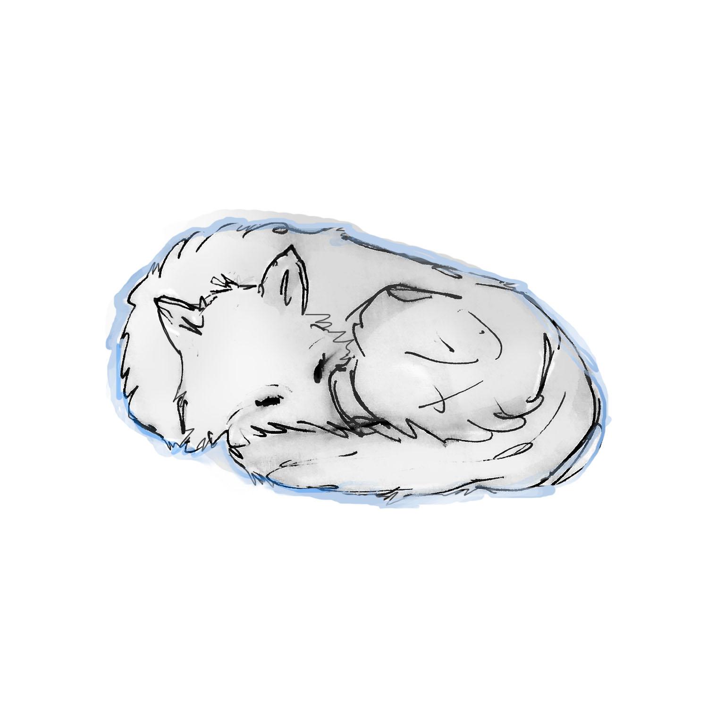wolf_curledup_outline_moreflushcontrast.jpg