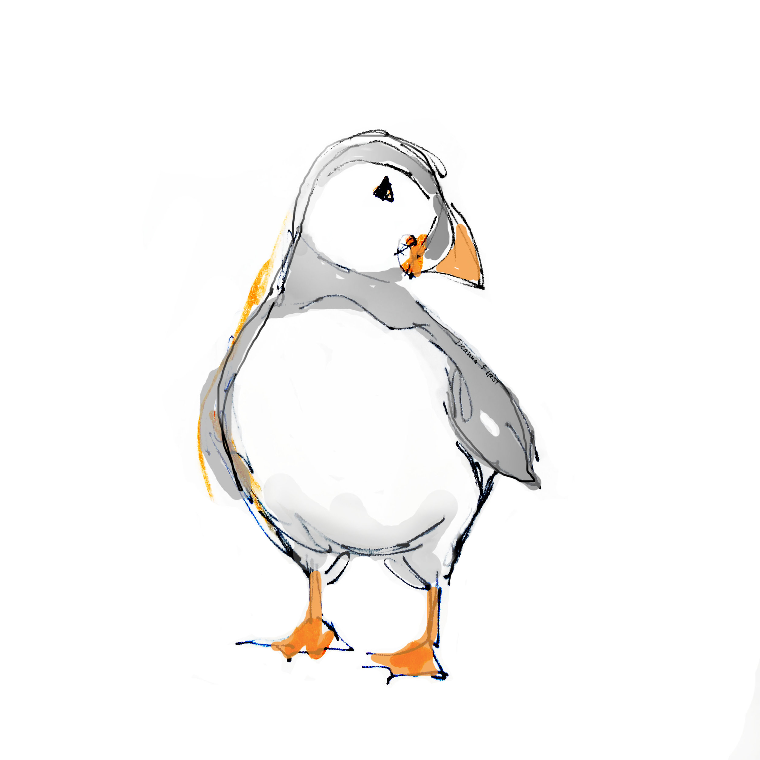 puffin_TheLimited_side_revisedscale.jpg