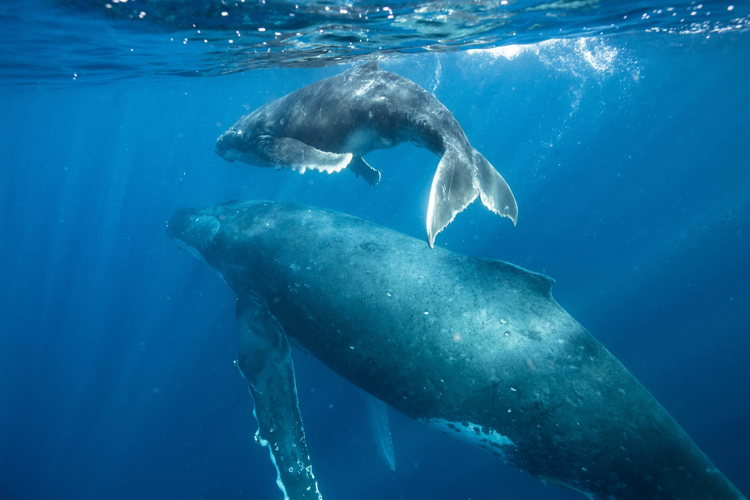 A mother and calm swim off together.